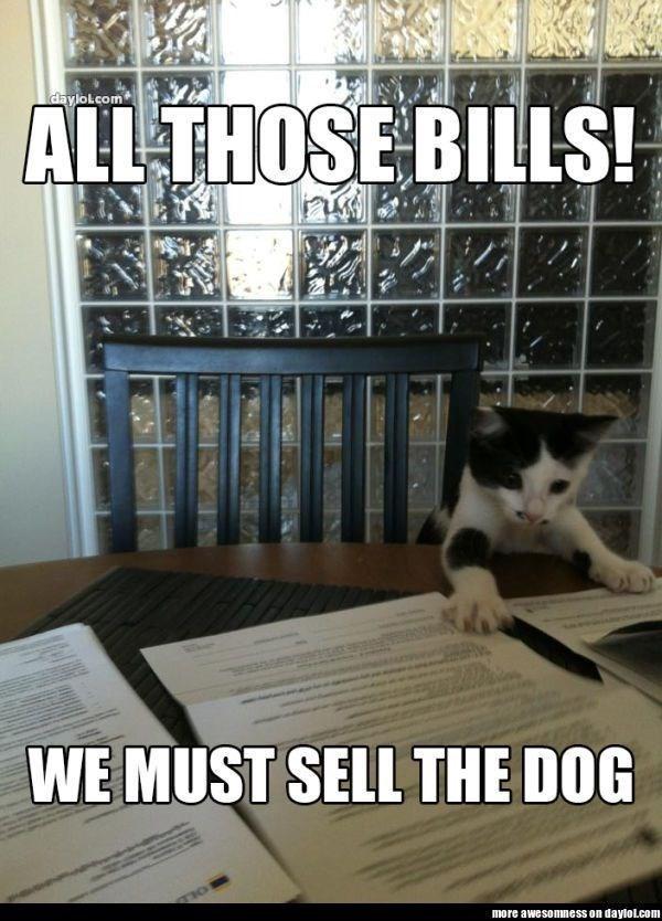 cat memes - 9380424192