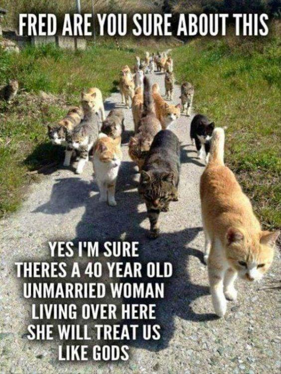 cat memes - 9380424448