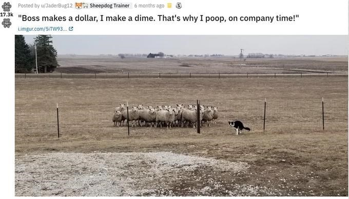 "Herd - Sheepdog Trainer Posted by u/JaderBug12 6 months ago 17.3k ""Boss makes a dollar, I make a dime. That's why I poop, on company time!"" Limgur.com/5ITW93...e"