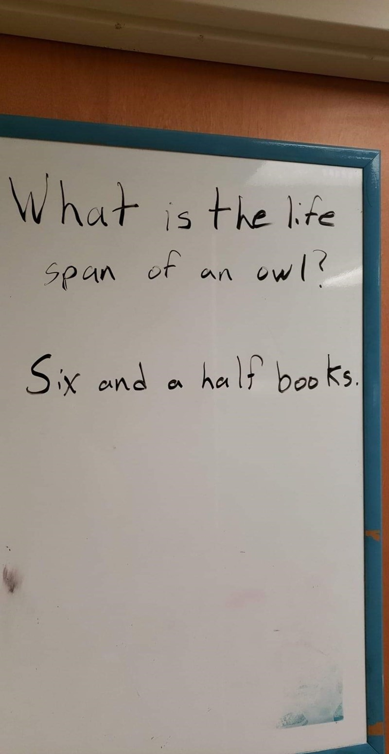 Text - What is the lfe owl? Span of an half boo ks Six and
