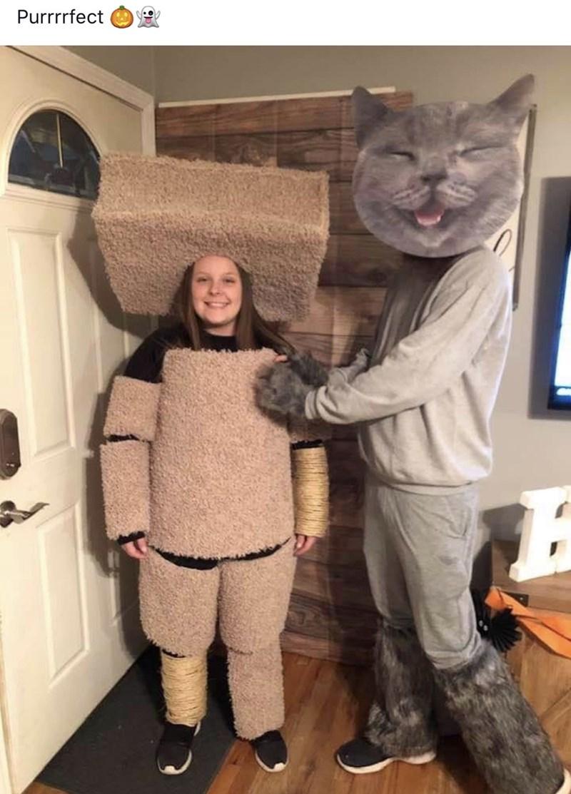 Cat - Purrrrfect