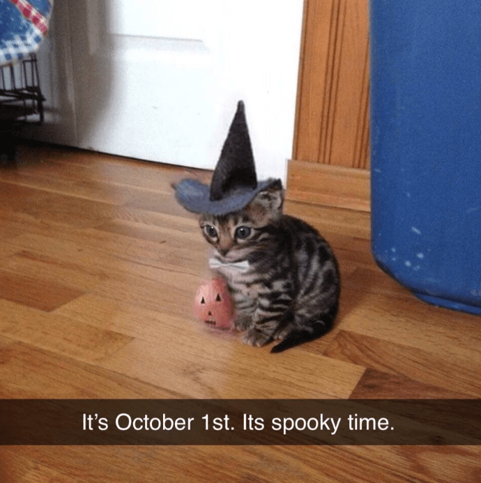 Cat - It's October 1st. Its spooky time.