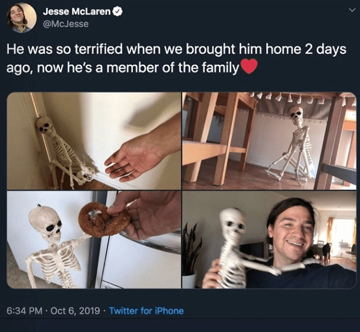 Human - Jesse McLarenO @McJesse He was so terrified when we brought him home 2 days ago, now he's a member of the family 6:34 PM Oct 6, 2019 Twitter for iPhone