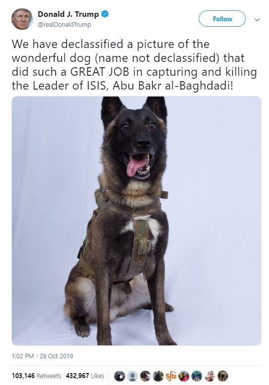 Mammal - Donald J. Trump Follow @realDonaldTrump We have declassified a picture of the wonderful dog (name not declassified) that did such a GREAT JOB in capturing and killing the Leader of ISIS, Abu Bakr al-Baghdadi! 1:02 PM 28 Oct 2019 sfte 103,146 Retweets 432,967 Likes