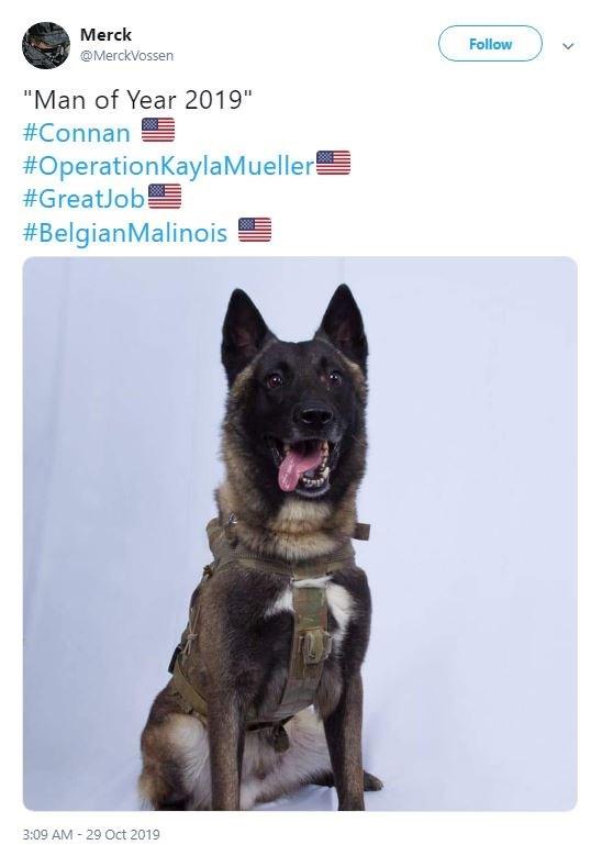 "Dog - Merck Follow @MerckVossen ""Man of Year 2019"" #Connan #OperationKaylaMueller #GreatJob #BelgianMalinois 3:09 AM 29 Oct 2019"