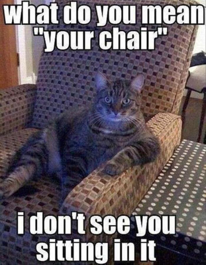 cat memes - 9380735744