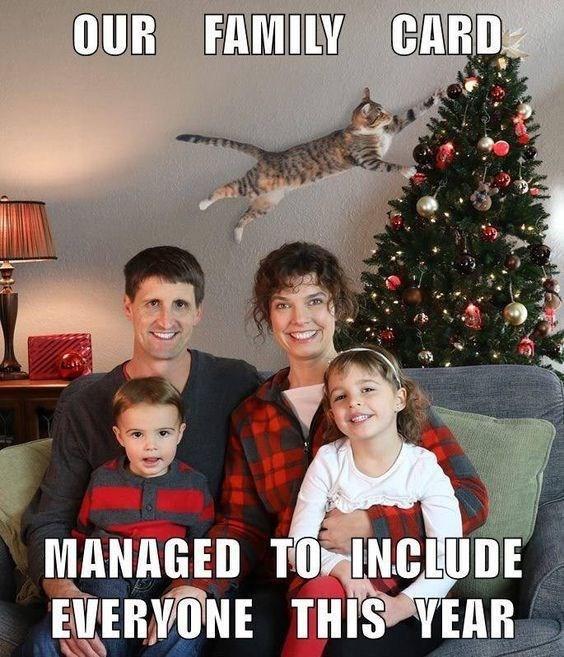 cat memes - 9380736000