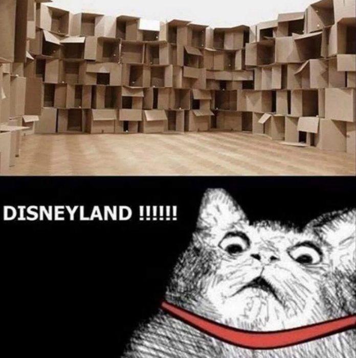 cat memes - 9380736256