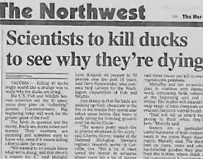 Newspaper - The Northwest CH The Hera Scientists to kill ducks to see why they're dying 2arve pd i povint to TOM e pt IN years dD ysewaider, Ma YDrO oolans MANy it TACOMA musoand tharabugewy wtyd D CS.h anNT W S c aders Henns nate hand O eing neiry s tharite b iZDThe wi n anaind Cenv tnig W r the reater The dyiark ducks e ut .c Thir mbers e Cectaing and OINE Why tgNariom eb afew the f n n are the eaty prin neathe A eding sh A ey Eeatya (arta Wwlto sit re photychi MChrs Hny The d Mahait the ma mE
