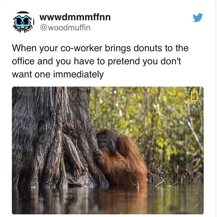 Text - wwwdmmmffnn @woodmuffin When your co-worker brings donuts to the office and you have to pretend you don't want one immediately