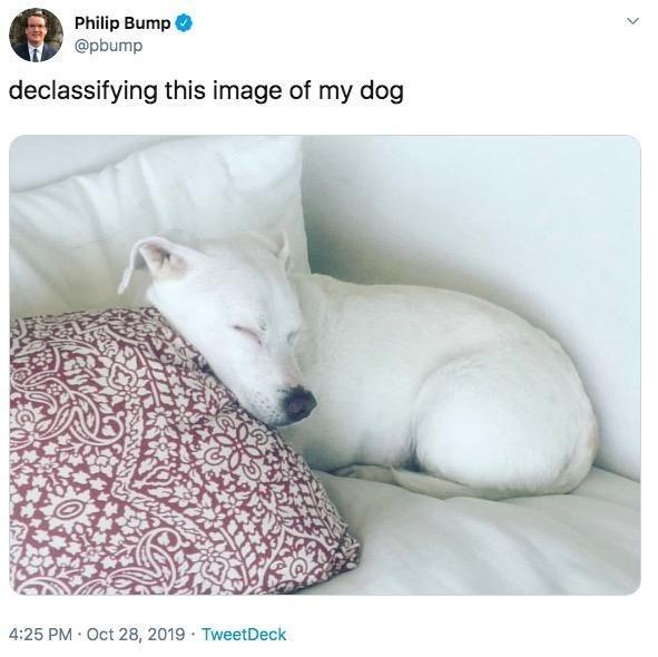 Canidae - Philip Bump @pbump declassifying this image of my dog 4:25 PM Oct 28, 2019 TweetDeck