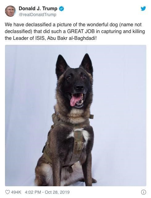 Mammal - Donald J. Trump @realDonaldTrump We have declassified a picture of the wonderful dog (name not declassified) that did such a GREAT JOB in capturing and killing the Leader of ISIS, Abu Bakr al-Baghdadi! 494K 4:02 PM Oct 28, 2019