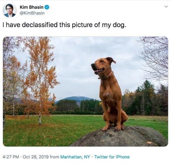 Dog - Kim Bhasin @KimBhasin I have declassified this picture of my dog. 4:27 PM Oct 28, 2019 from Manhattan, NY Twitter for iPhone