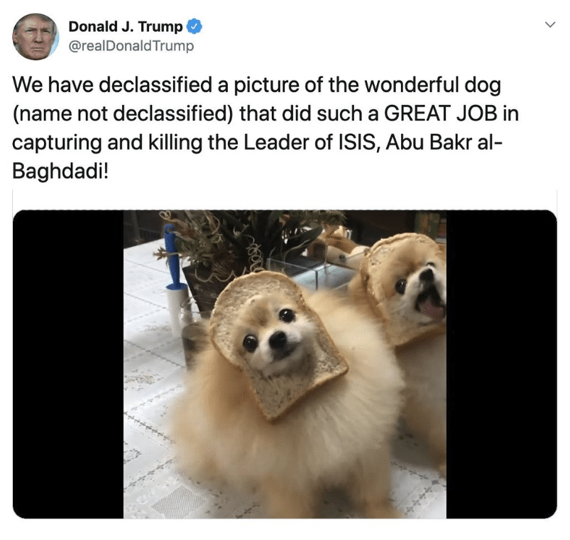 Vertebrate - Donald J. Trump @realDonaldTrump We have declassified a picture of the wonderful dog (name not declassified) that did such a GREAT JOB in capturing and killing the Leader of ISIS, Abu Bakr al- Baghdadi!