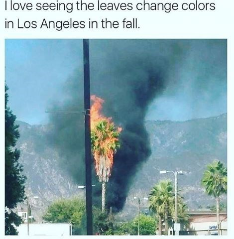 Adaptation - I love seeing the leaves change colors in Los Angeles in the fall.
