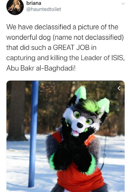 Fur - briana @hauntedtoilet We have declassified a picture of the wonderful dog (name not declassified) that did such a GREAT JOB in capturing and killing the Leader of ISIS, Abu Bakr al-Baghdadi!