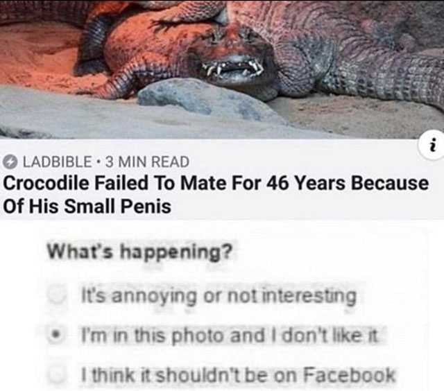 Person - Komodo dragon - i LADBIBLE 3 MIN READ Crocodile Failed To Mate For 46 Years Because Of His Small Penis What's happening? it's annoying or not interesting I'm in this photo and I don't like it I think it shouldn't be on Facebook