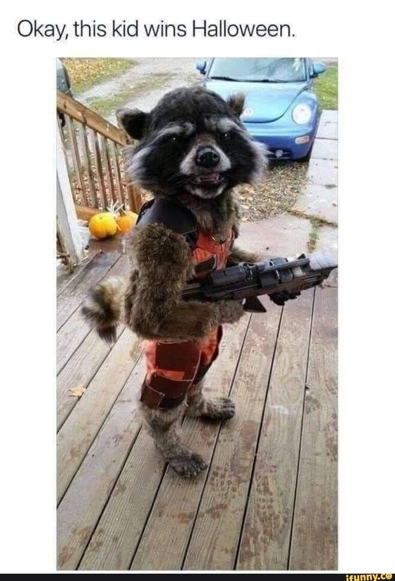 Dog - Okay, this kid wins Halloween. ifunny.co