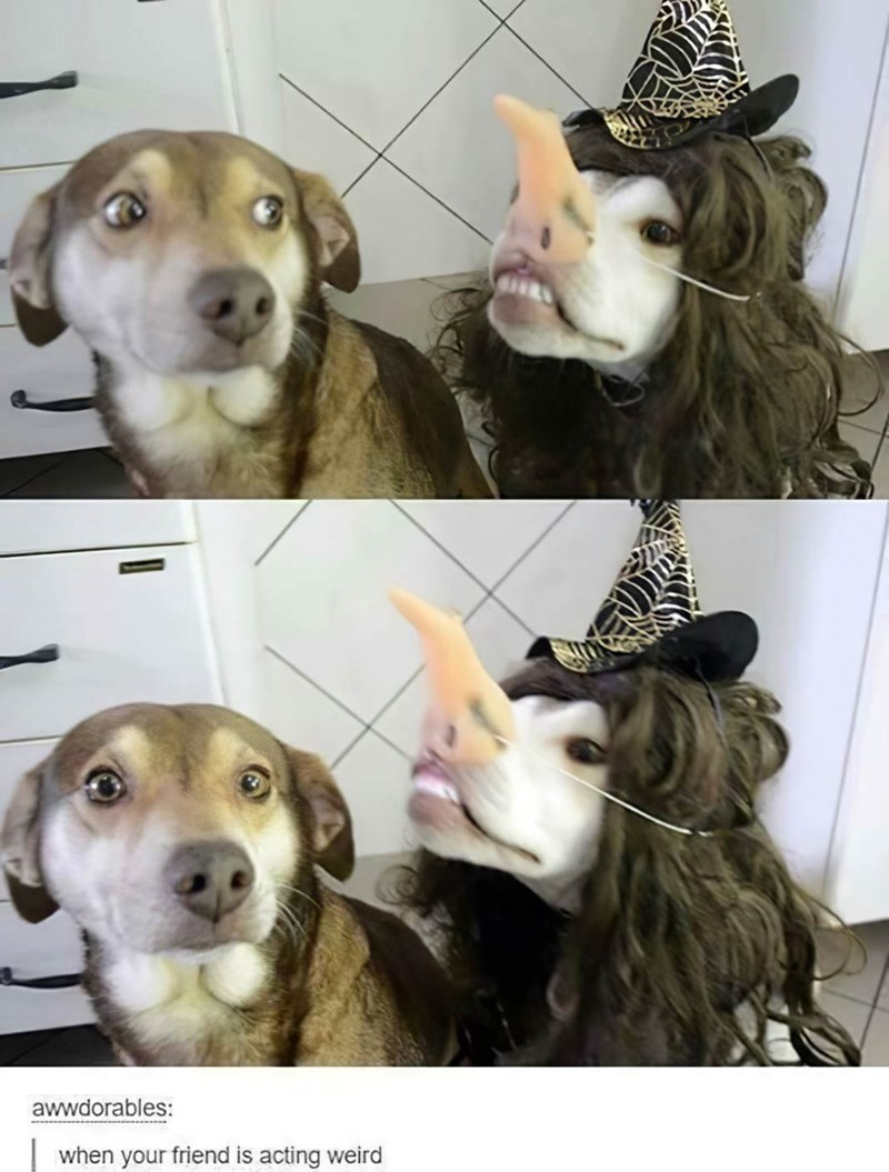 Dog breed - awwdorables: when your friend is acting weird