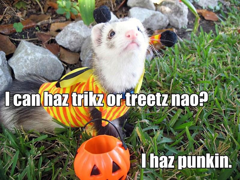 Grass - I can haz trikz or treetz nao? I haz punkin.