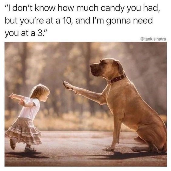 """Dog - """"I don't know how much candy you had, but you're at a 10, and I'm gonna need you at a 3."""" @tank.sinatra"""