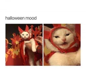 Cat - halloween mood