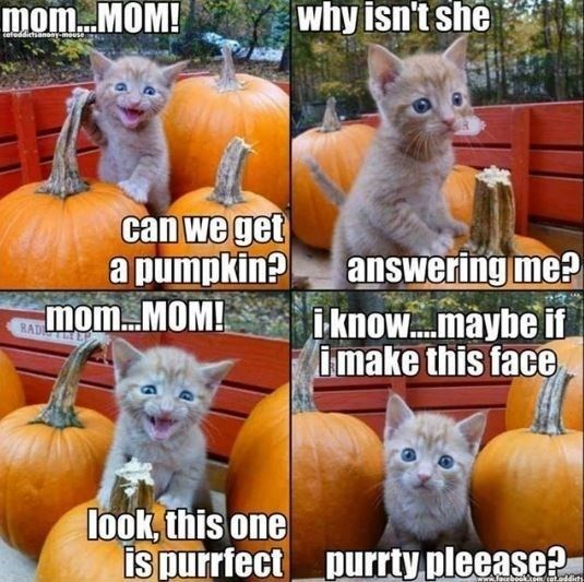 Cat - mom..MOM! why isn't she teteddictsanon-meuse can we get a pumpkin?answering me? mom MOM! i know....maybe if imake this face RAD look, this one is purrfect purrty pleease? em/cat.oddicty a
