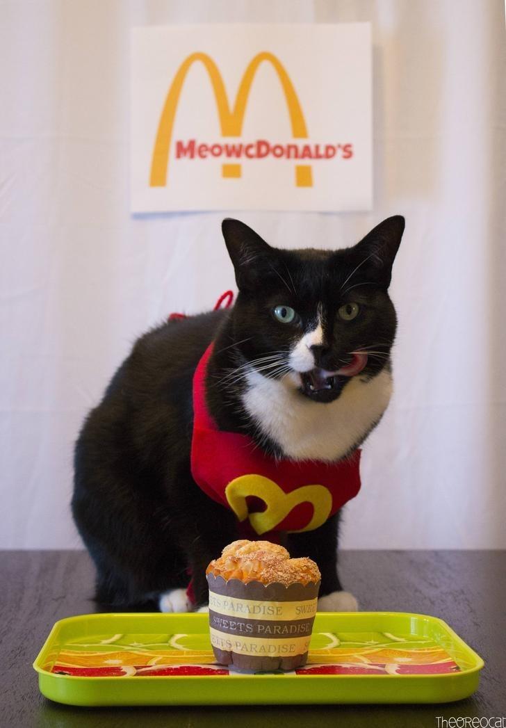 Cat - MeowcDonALD's SPARADISE SW 5ETS PARADISE ES PARADISE TheOReocat