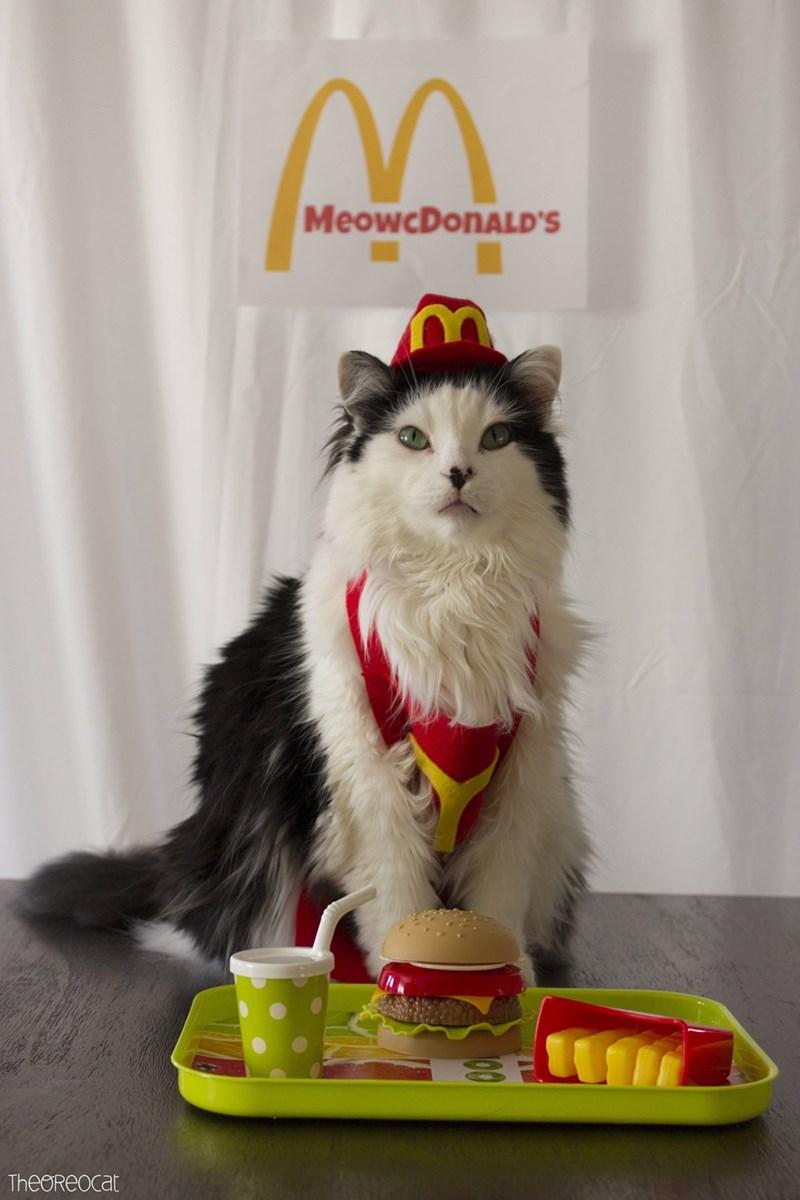 Mammal - MeowcDonALD'S TheOReocat