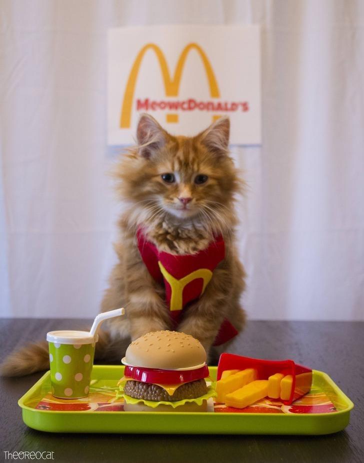 Cat - MeowcDonALDs TheoReocat