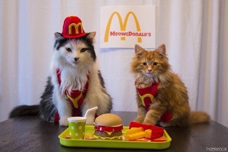 Cat - MeowcDonALD'S TheOReocat