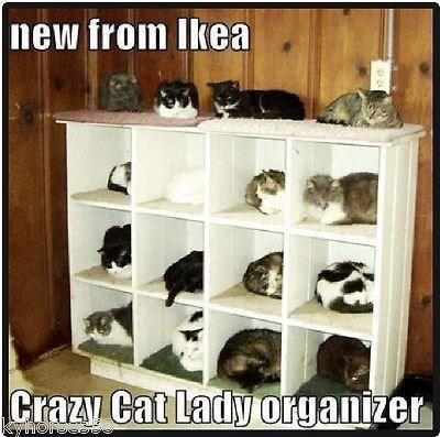 cat memes - 9381259264