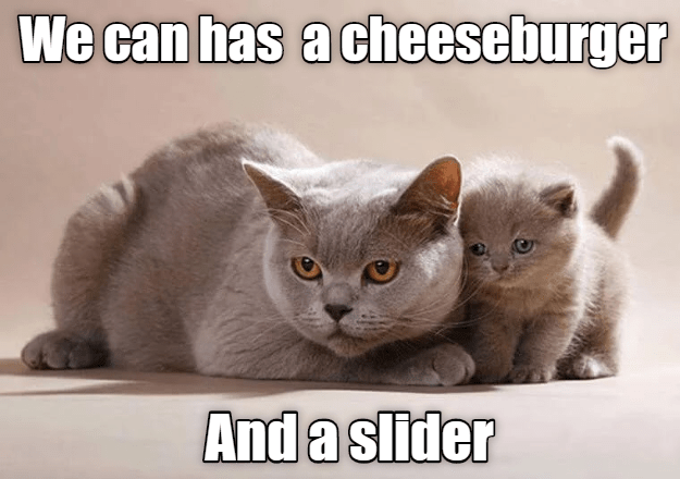 Cat - We can has acheeseburger And a slider