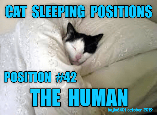 Cat - CAT SLEEPING POSITIONS POSITION #42 THE HUMAN bajio6401 october 2019