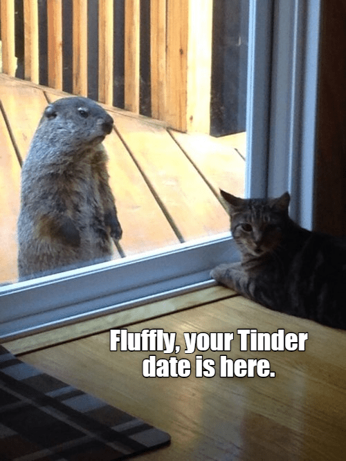 Cat - Fluffly, your Tinder date is here.