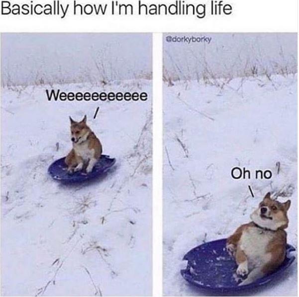 Canidae - Basically how I'm handling life edorkyborky Weeeeeeeeeeе Oh no