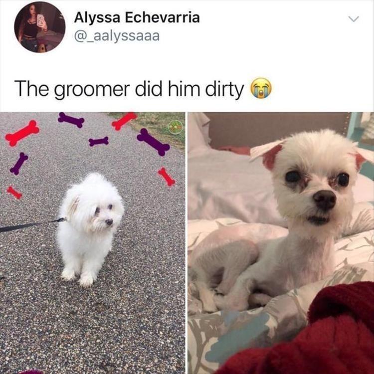 Vertebrate - Alyssa Echevarria @aalyssaaa The groomer did him dirty