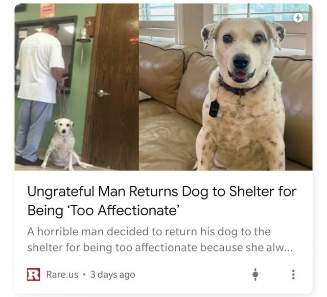 Vertebrate - Ungrateful Man Returns Dog to Shelter for Being 'Too Affectionate' A horrible man decided to return his dog to the shelter for being too affectionate because she alw... R Rare.us 3 days ago