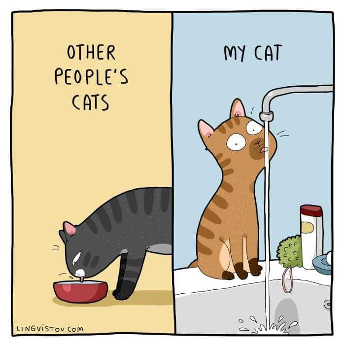 Cartoon - OTHER MY CAT PEOPLE'S CATS LINGVISTOV COM
