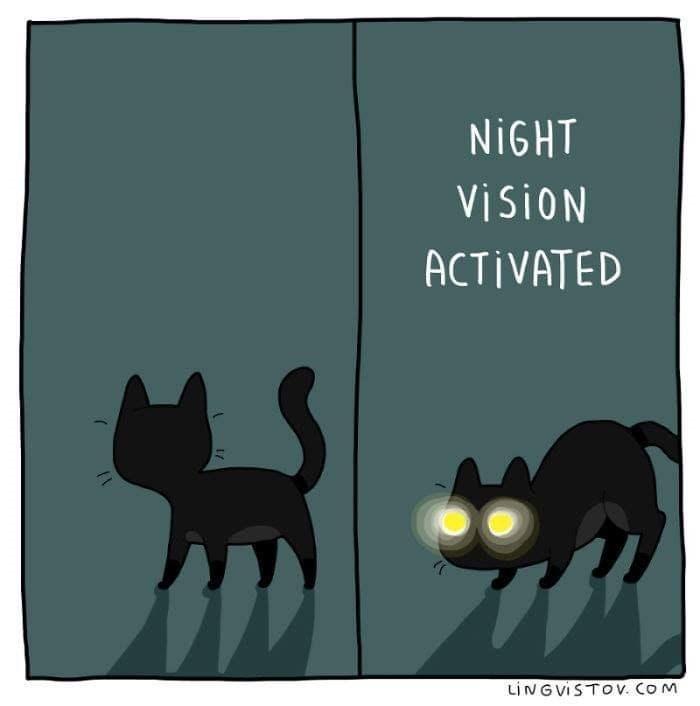 Black cat - NIGHT ViSiON ACTIVATED LINGVISTOV. COM