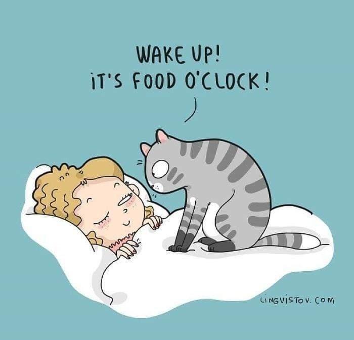 Cartoon - WAKE UP! iT'S FOOD O'CL0CK ! LINGVISTOV. COm