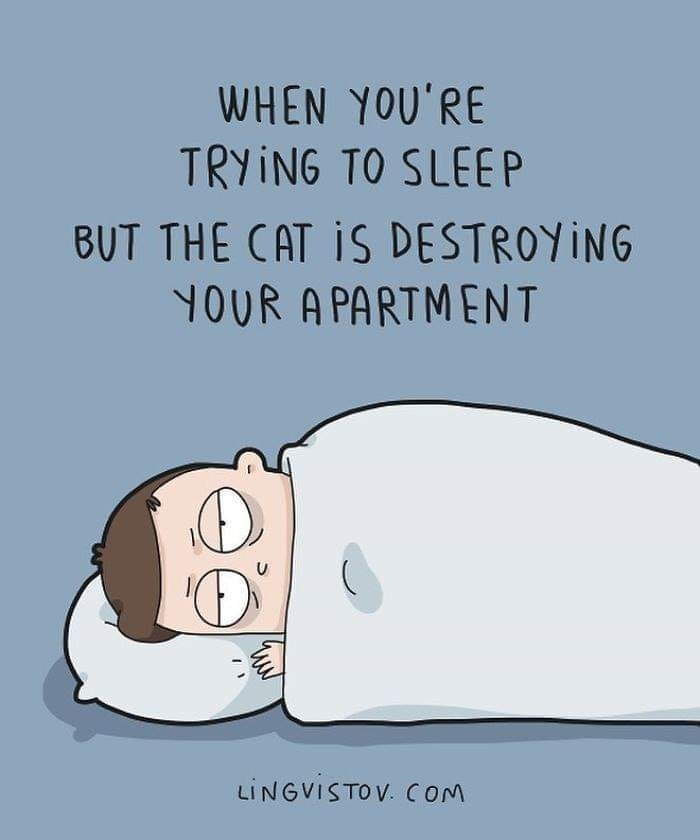 Cartoon - WHEN YOU'RE TRYING TO SLEEP BUT THE CAT IS DESTROYING YOUR A PARTMENT LINGVISTOV. COM