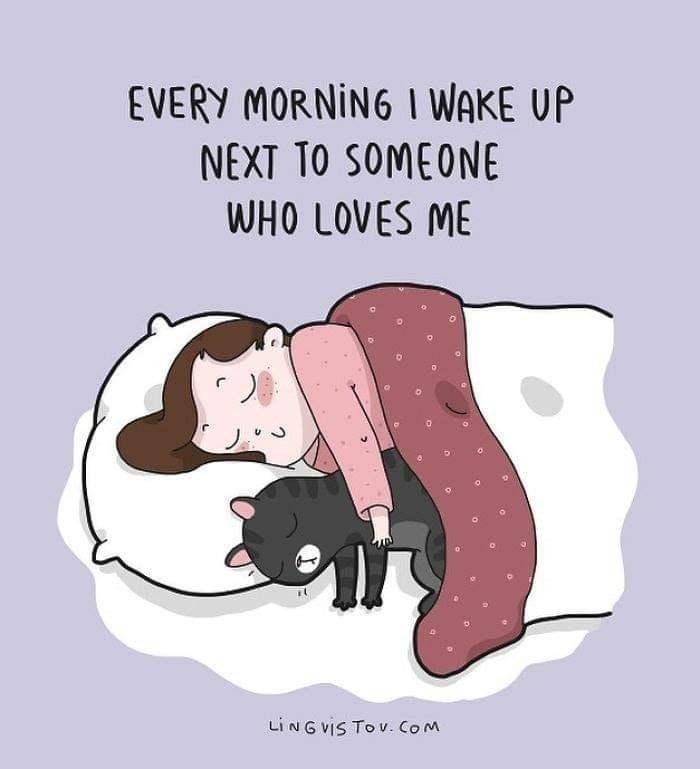 Cartoon - EVERY MORNING I WAKE UP NEXT TO SOMEONE WHO LOVES ME LINGVIS TO v. Com