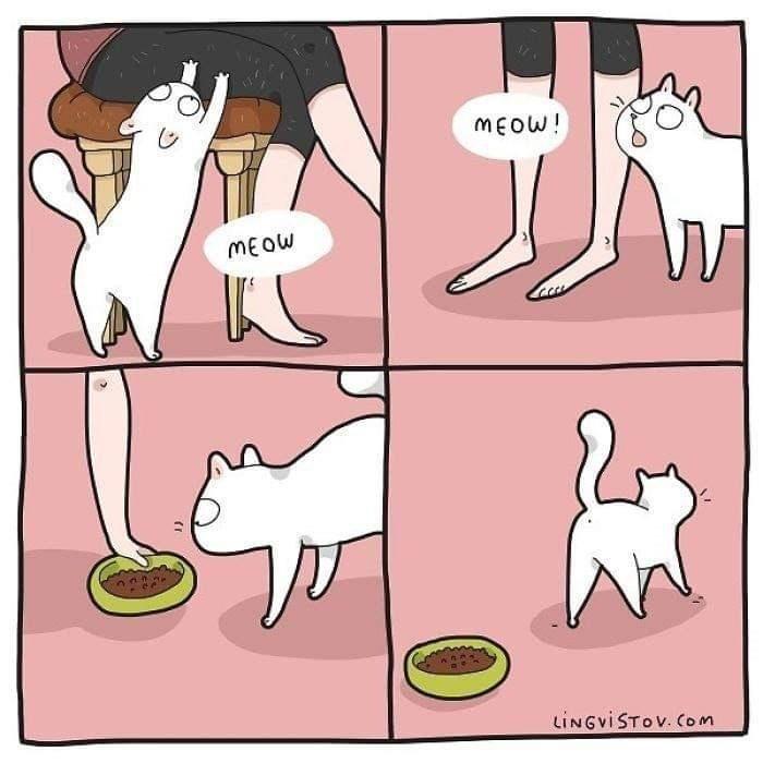 Cartoon - MEOW! MEOW tINGviSTOV. Com