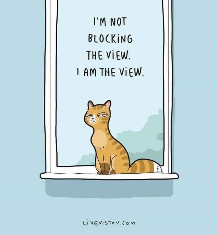 Cat - IM NOT BLOCKING THE VIEW I AM THE VIEW LINGVISTOV.Com
