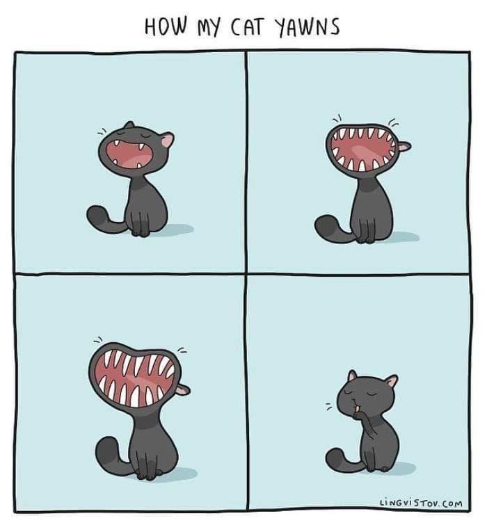 Cartoon - HOW MY CAT YAWNS 3 LINGVISTOV. COm