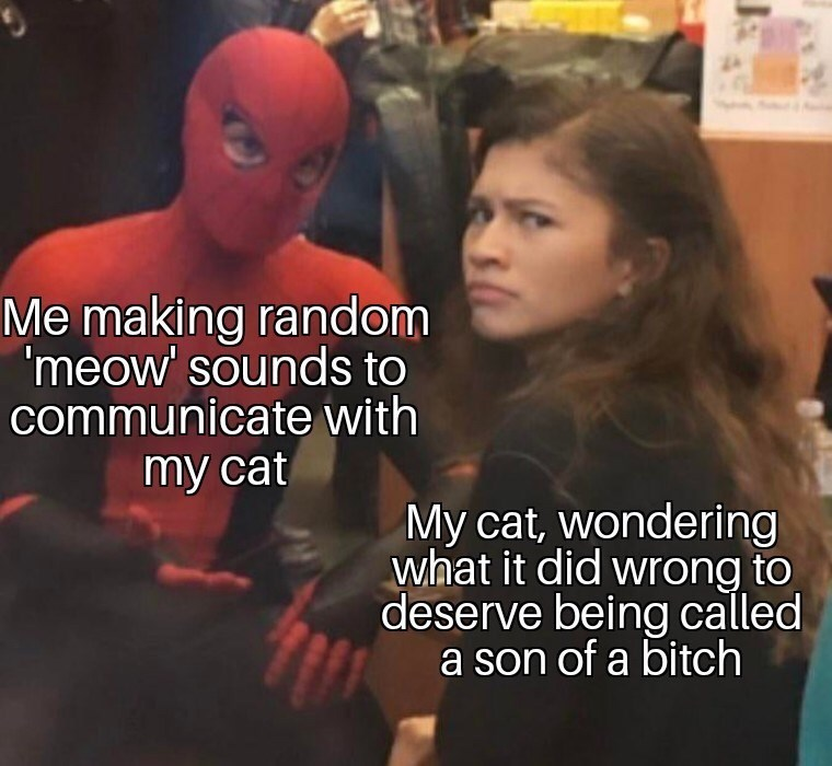 Photo caption - Me making random 'meow' sounds to communicate with my cat My cat, wondering what it did wrong to deserve being called a son of a bitch