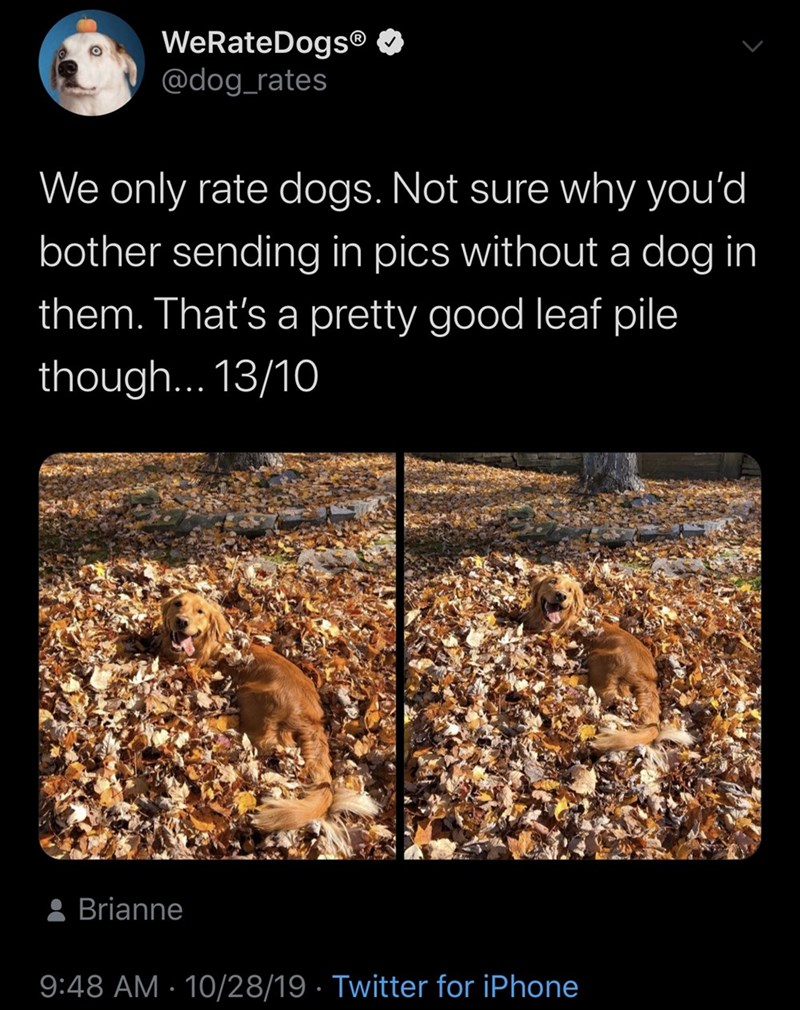 Soil - WeRateDogs® @dog_rates We only rate dogs. Not sure why you'd bother sending in pics without a dog in them. That's a pretty good leaf pile though... 13/10 Brianne 9:48 AM 10/28/19 Twitter for iPhone