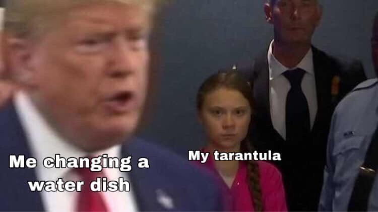 Facial expression - My tarantula Me changing a water dish