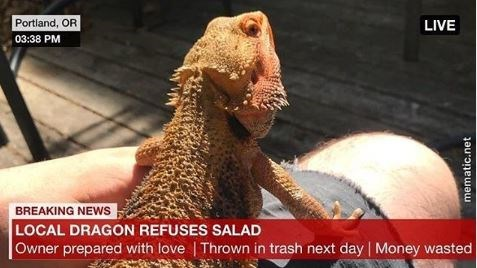 Varanidae - Portland, OR LIVE 03:38 PM BREAKING NEWS LOCAL DRAGON REFUSES SALAD Owner prepared with love | Thrown in trash next day Money wasted mematic.net